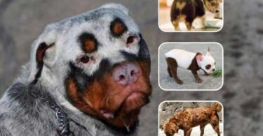 33 Adorable Dogs with Unique Coats!